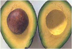 Avocado of  aquacate