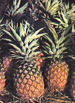 The pineapple or piña